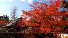 隨心院の秋・3