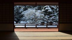 隨心院の冬・2