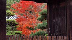 隨心院の秋・1